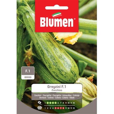 Blumen zucchino greyzini f1