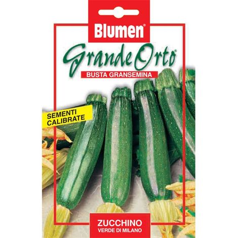 Blumen zucchino verde di milano