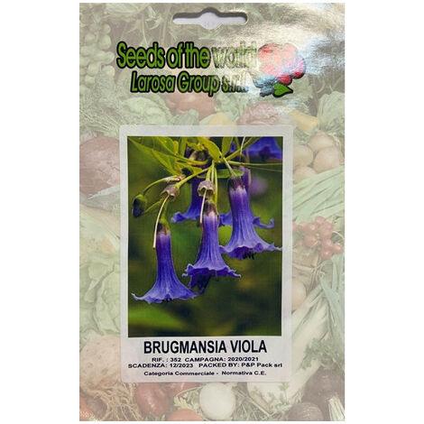 """main image of """"Brugmansia viola (Datura) (Semente)"""""""