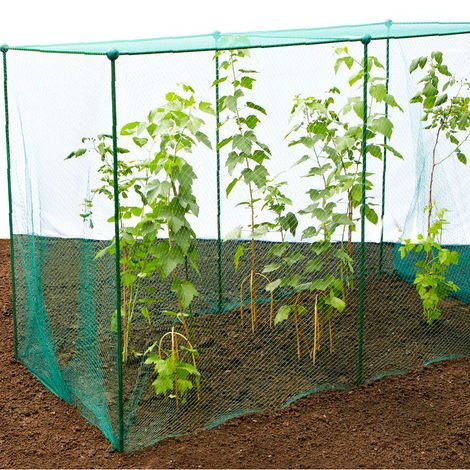 Build-a-Cage Fruit & Veg Cage with Bird Net - 2.5m x 2.5m x 1.875m high