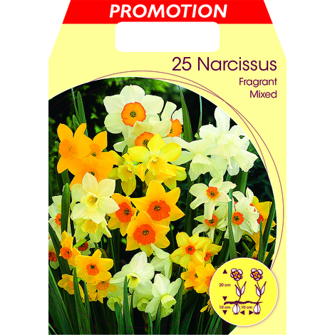 BULBI AUTUNNALI NARCISI FRAGRANT MIXED CONFEZIONE DA 25 BULBI BULBS BULBES