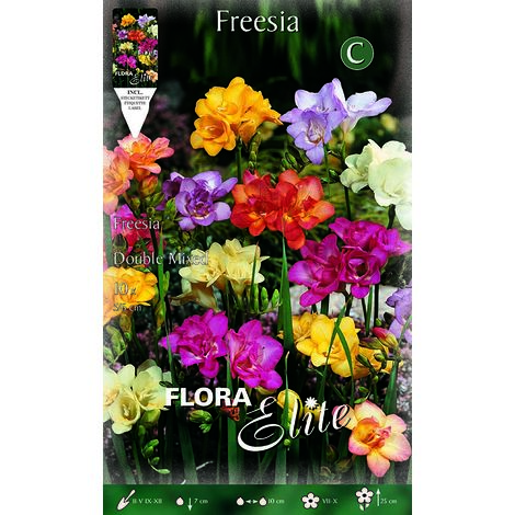 BULBI PRIMAVERILI FREESIA DOUBLE MIX CONFEZIONE DA 10 BULBI BULBS BULBES