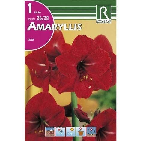 Bulbo Amaryllis rojo Rocalba
