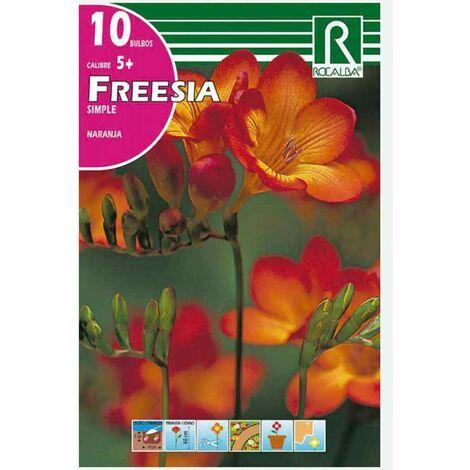 BULBO FREESIA SIMPLE NARANJA- 10 UD