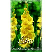 Bulbo Gladiolo amarillo 10 unidades