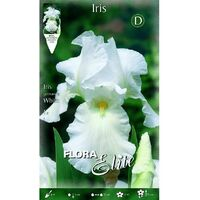 Bulbo Iris germánica blanco 1 unidad
