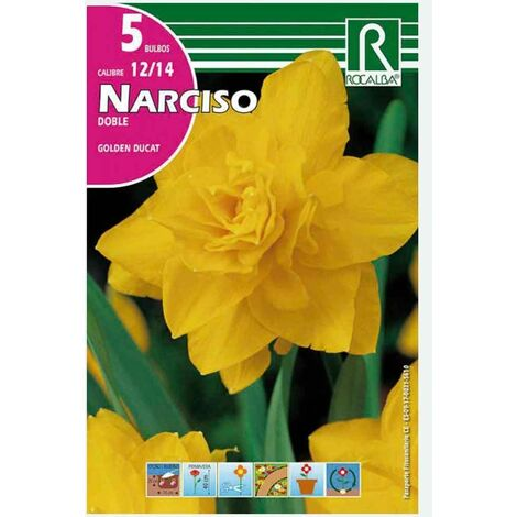 BULBO NARCISO DOBLE GODEN DUCAT AMARILLO - 5 UD