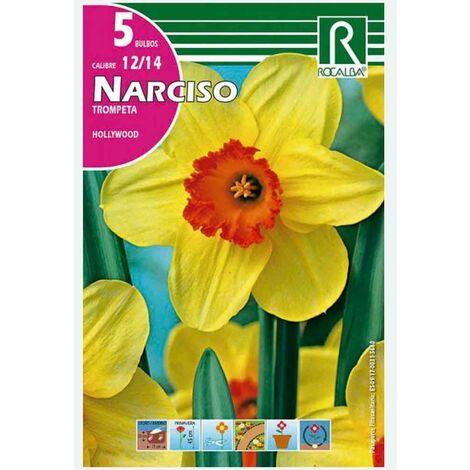 BULBO NARCISO TROMPETA HOLLYWOOD AMARILLO - 5 UD
