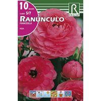 Bulbo ranúnculo Rosa Rocalba