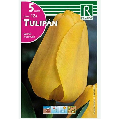 BULBO TULIPÁN AMARILLO GOLDEN APELDOORN - 5 UD
