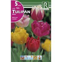 Bulbo tulipán doble mezcla de colores Rocalba