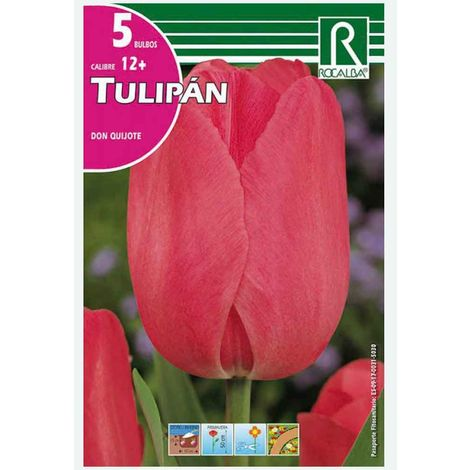 BULBO TULIPÁN DON QUIJOTE ROSA - 5 UD