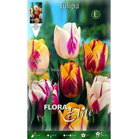 Bulbo de tulipan