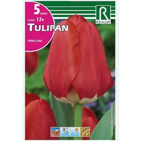 BULBO TULIPÁN ROSA SPRING SONG - 5 UD