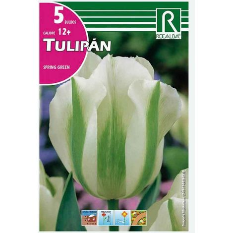 BULBO TULIPÁN VERDE SPRING GREEN - 5 UD