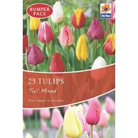 Bulk Tulips Tall Tulips Tall Mixed Spring Flower Bulbs