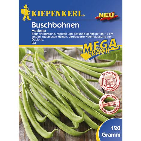 Buschbohnen Modesto Maxi-Pack