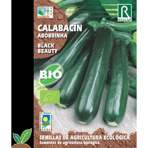 CALABACIN BLACK BEAUTY ECO - SEMILLAS