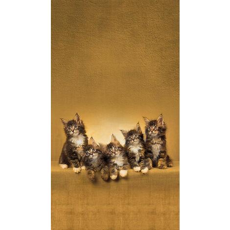 Cats, rideau imprimé 5 chatons marrons 140x245 cm, 1 part