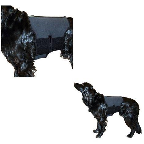 Ceinture lombaire pour chien en tissu thérapeutique Désignation : Ceinture lombaire   Taille : L Back on Track 33112