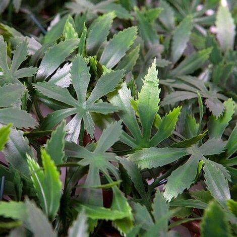 Celosía extensible arce verde 1m x 1,5m