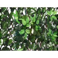 Celosia Extensible Con Hojas Y Brotes 1x2 M.