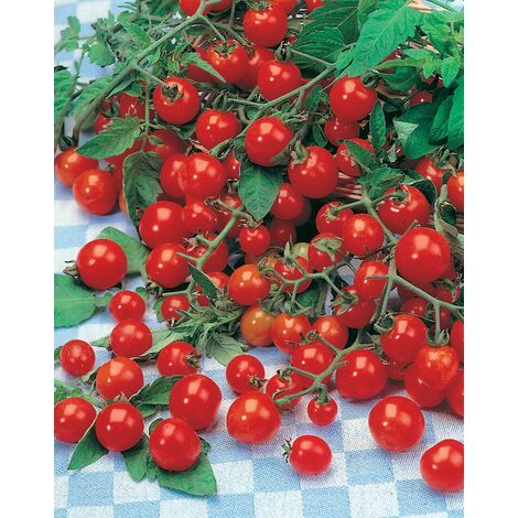 Cerise - 0.5 g - Tomates