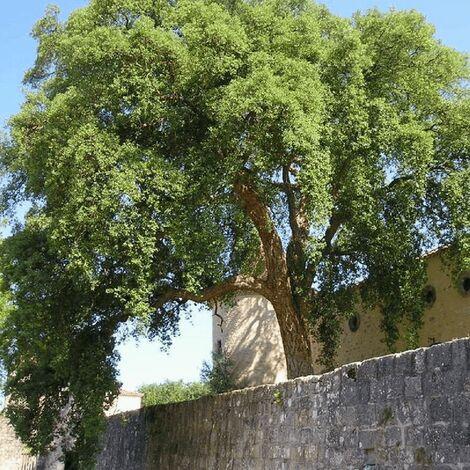 Plantar árboles después de elegir bien su emplazamiento