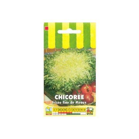 Chicorée frisée fine de Meaux - 3g