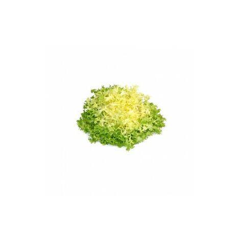 Chicorée frisée grosse pommant seule - 3g