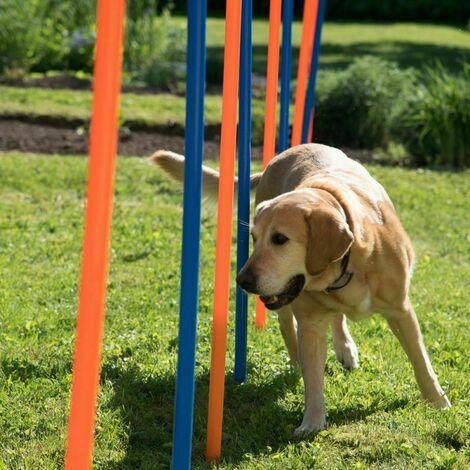 Chien d'agilité du jeu de formation de chien de sport