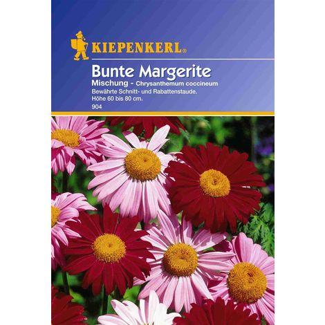 Chrysanthemum coccineum Margerite bunte Mischung