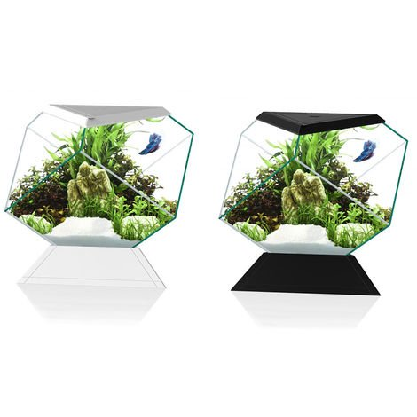 CIANO NEXUS PURE BETTA LIFE 5C ACQUARIO PER BEETTA 5.5 LITRI