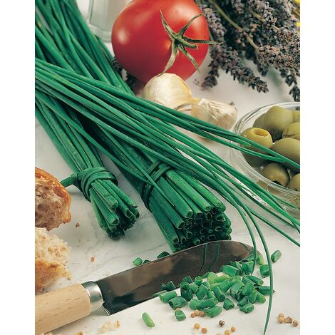 CIBOULETTE CHINOISE PERPETUELLE - 1 g - Les Légumes Anciens