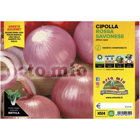 Cipolla rosata savonese [1 Plateaux da 12]