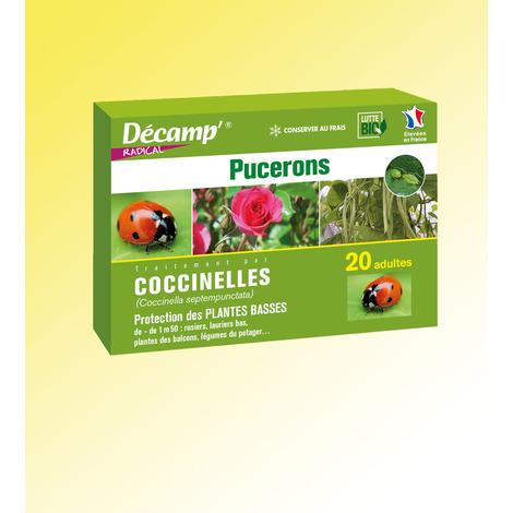 Coccinelles - Adalia Bipunctata contre les pucerons des plantes hautes de + de 1,50 m - La boîte - Insectes auxiliaires