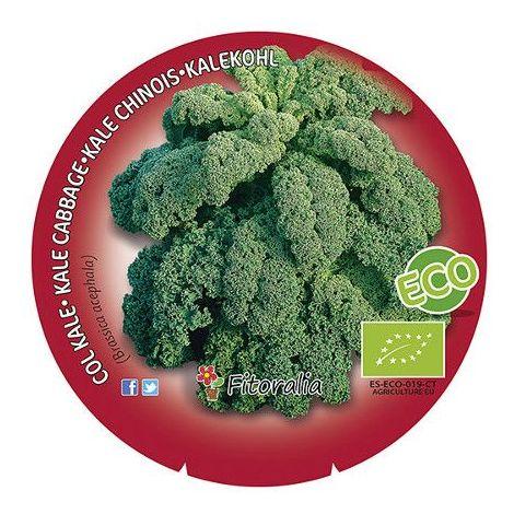 Col Kale - 12Uds. - Alveolos - ECO