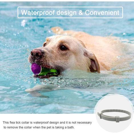 Collar del gato del perro anti pulgas garrapatas insectos 8 Meses proteccion impermeable y dura mas tiempo de Mascota Collares, gris, 62cm