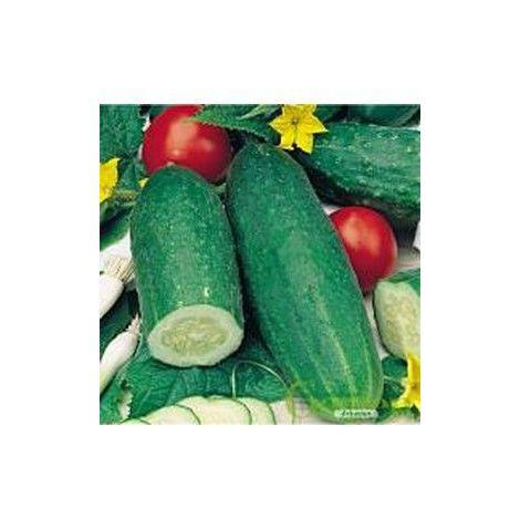 Concombre Délicatesse - 5g