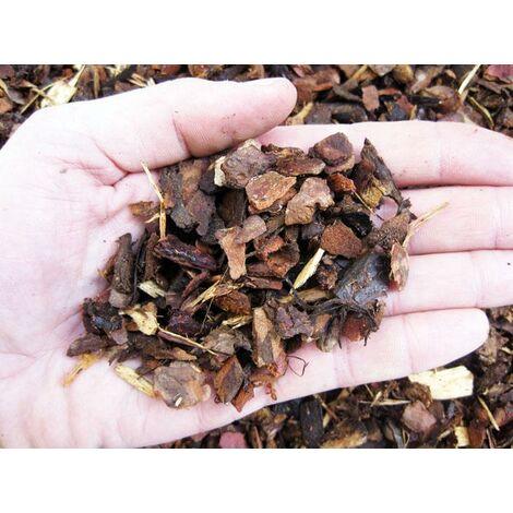 """main image of """"Corteccia di pino rossa portoghese"""""""