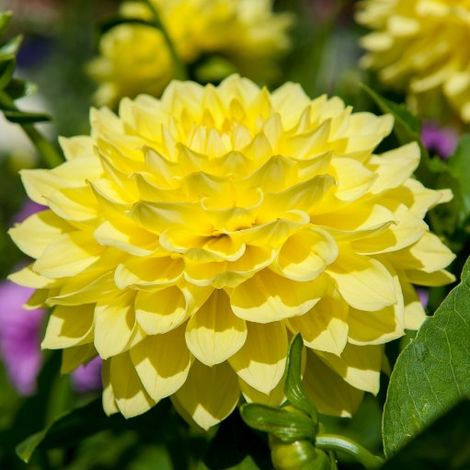 Dahlia Kelvin Floodlight - Dalia (1 BULBO)