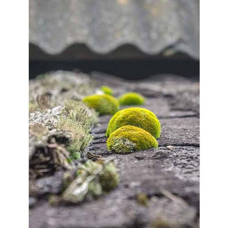 DALEP 3100 – Traitement 2 en 1: Fongicide & hydrofuge d'origine végétale – Poche souple 2L