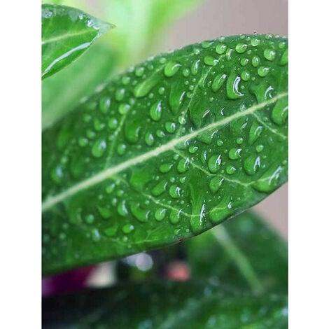 DALEP D 31 éco·R Protection Hydrofuge d'origine végétale – Bidon de 20L