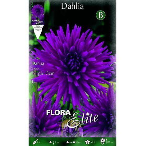 Dalia cactus azul violeta 1 unidad