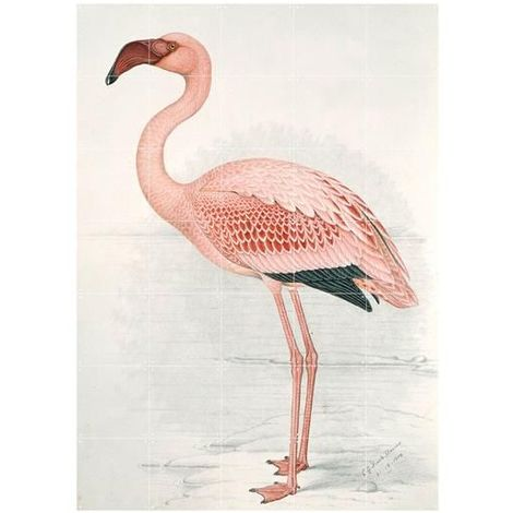 Décoration murale IXXI Greater Flamingo 100 x 140 cm