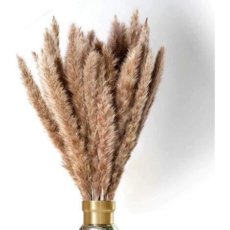 Décoration séchée à l'herbe de la pampa, petite herbe de la pampa Beige naturel Plantation naturelle Phragmites Fleurs artificielles , 10
