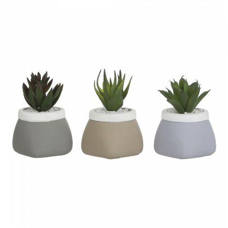 *derniere unites* cactus, plante en pot