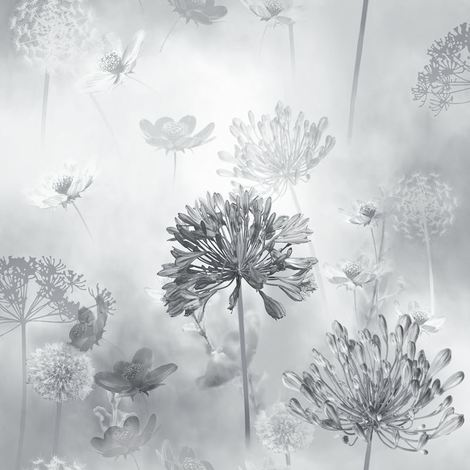 DISCONTINUEDFlower Wallpaper Floral Spring Meadow Field Magical Dandelion GreyScale Arthouse