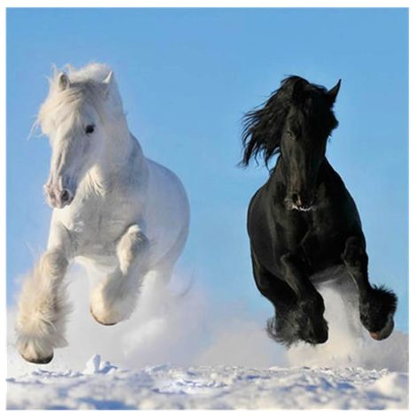DIY Diamond Painting 5D Black white horse Without framing to decorate your living room or bedroom Hasaki