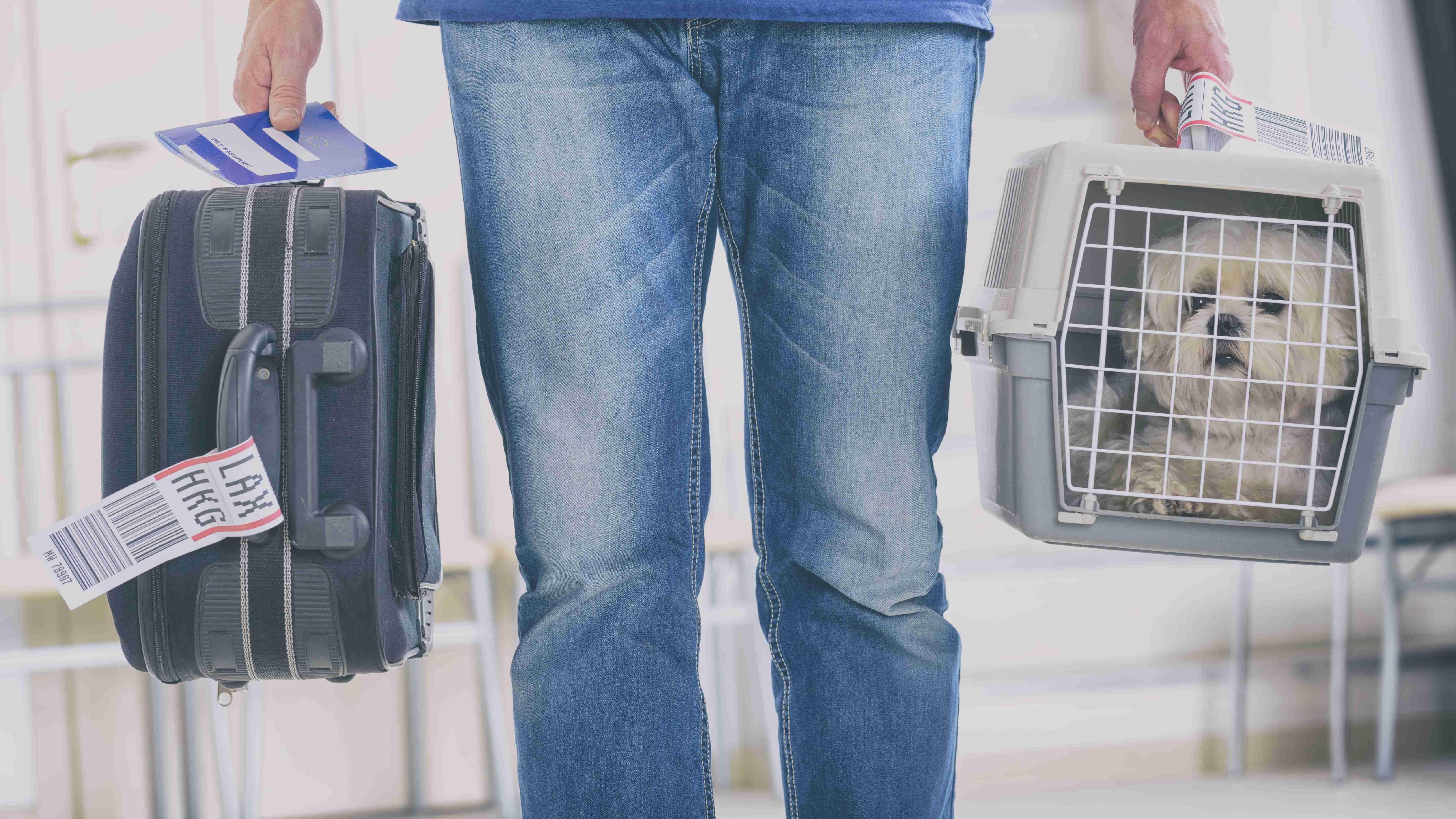 Normas IATA para transporte de perros y gatos en avión